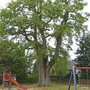 Fachgerechte Baumpflege kompakt FAB