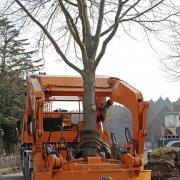 Großbaumverpflanzung GROSS
